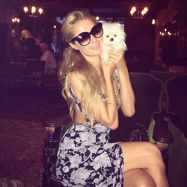 Paris Hilton's Pomeranian Puppy | Instagram Pictures