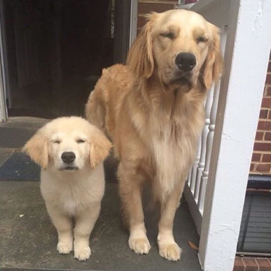 What Is the Don't Talk to Me or My Son Ever Again Meme?