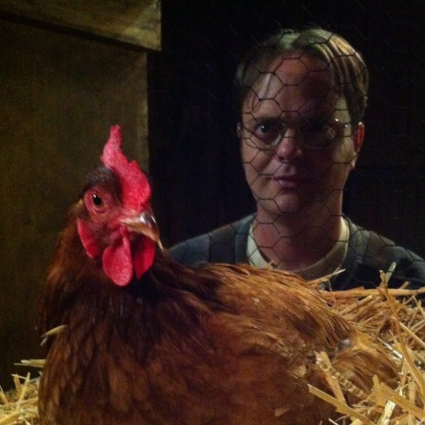 Rainn Wilson posed near a chicken coop while shooting his spinoff of The Office. Source: Instagram user rainnwilson