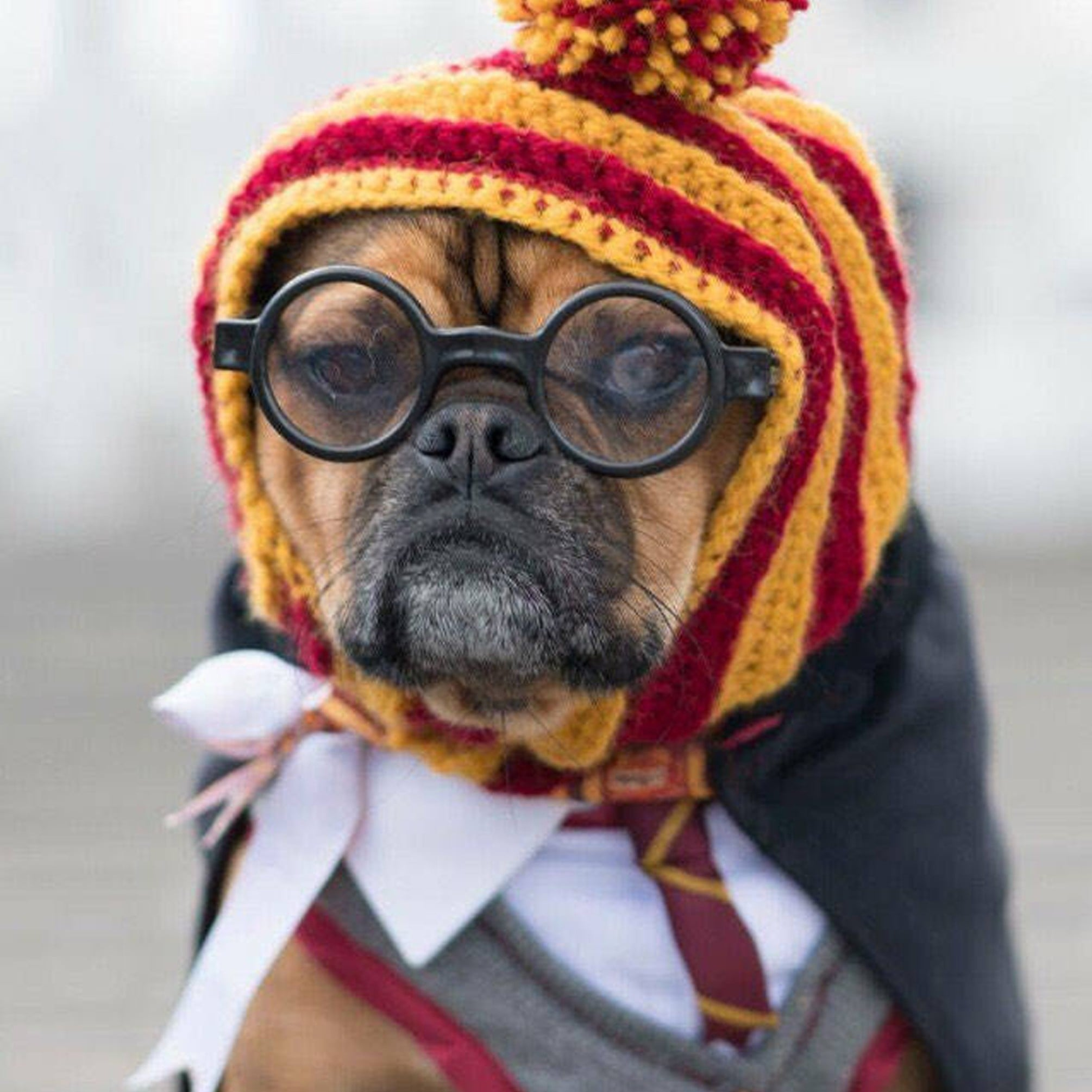Harry Potter Dog Halloween Costumes.Harry Potter Costumes For Dogs And Cats Popsugar Family