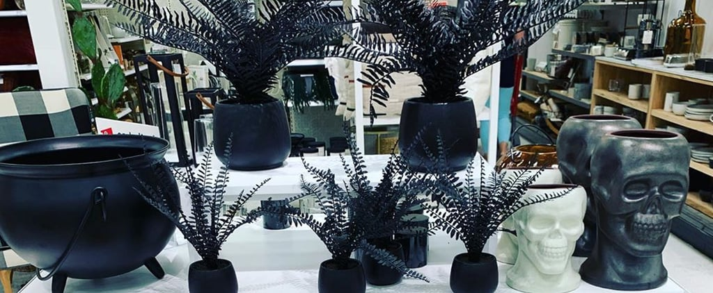 Target Has All-Black Ferns Perfect For Halloween Decorating