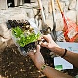 Veggie Garden Monthly Subscription