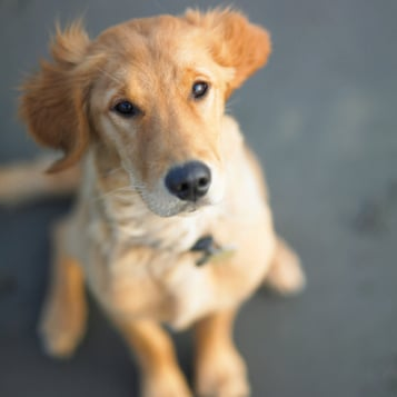Reduce Stress by Playing With Dogs