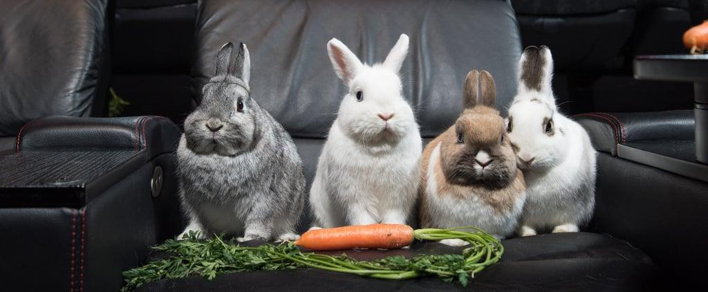 Rabbits Watching Peter Rabbit Cinema
