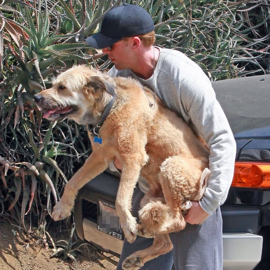 Ryan Gosling at Runyon With His Dog George Pictures