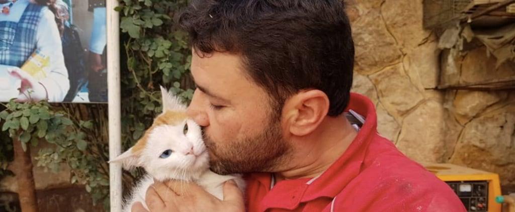 رجل القطط الحلبي