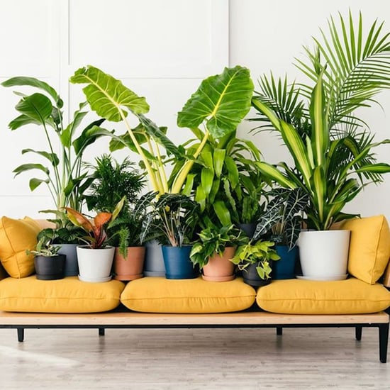 The Best Indoor Houseplants From Bloomscape
