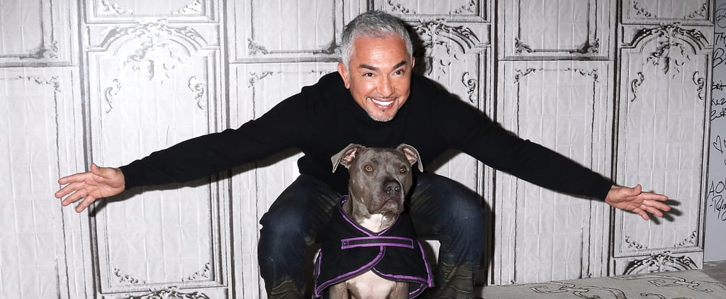 Find Out Cesar Millan's Top 10 Movie Pets
