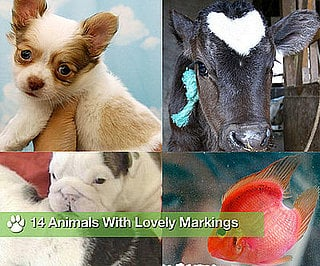 Sugar Shout Out: Animals With Lovely Markings