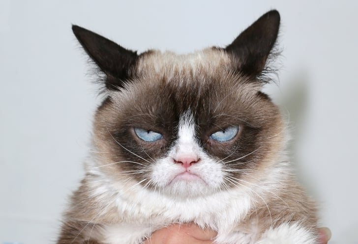 Funny Cat Gifs Popsugar Tech