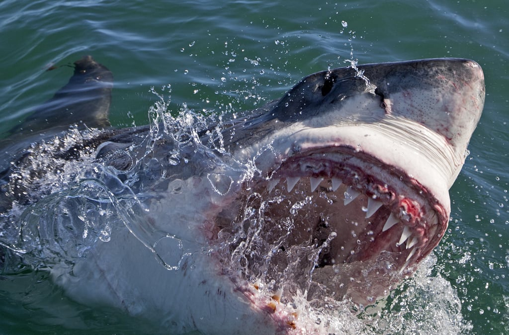 13 Irrational Fears You Get After Watching Shark Week