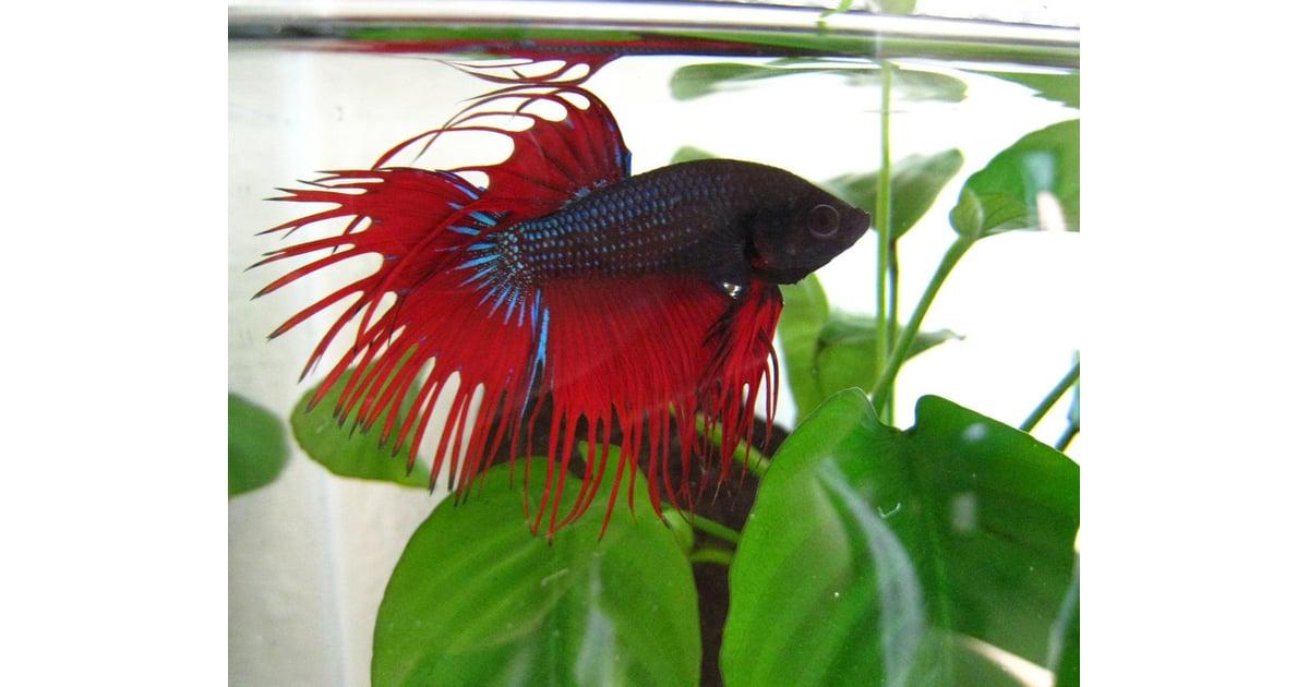 Popular pet fish names most popular pet names for for Pet fish names