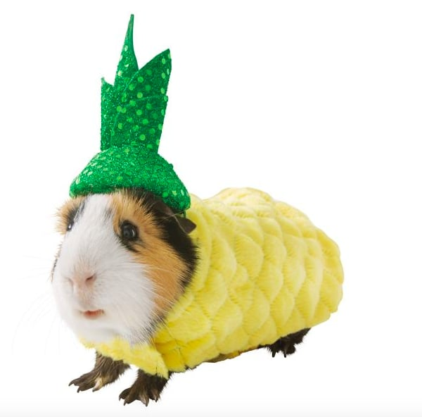 Guinea Pig Halloween Costumes Exist, and Yup, That Is Definitely a Pineapple Suit