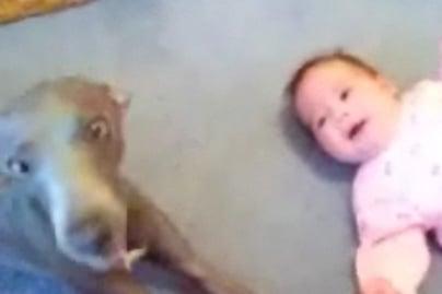 Dog Howls to Hush Baby