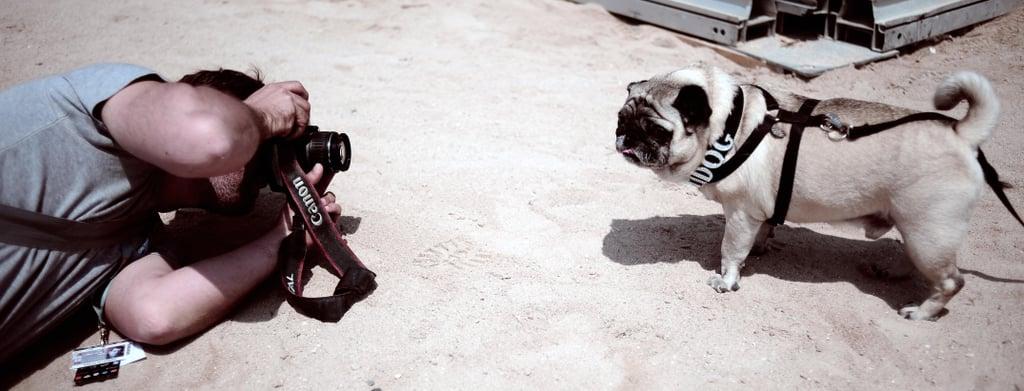 Palm Dog 2008 Photoshoot