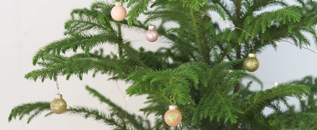 Best Live Tabletop Christmas Trees 2019