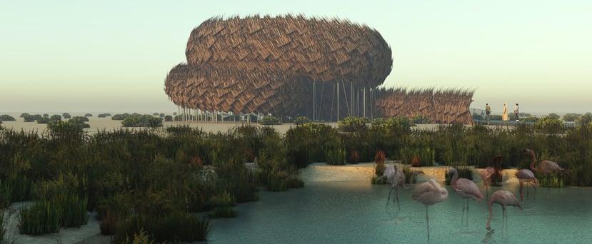 برج لمراقبة طيور الفلامنجو قريباً في أبوظبي 2019