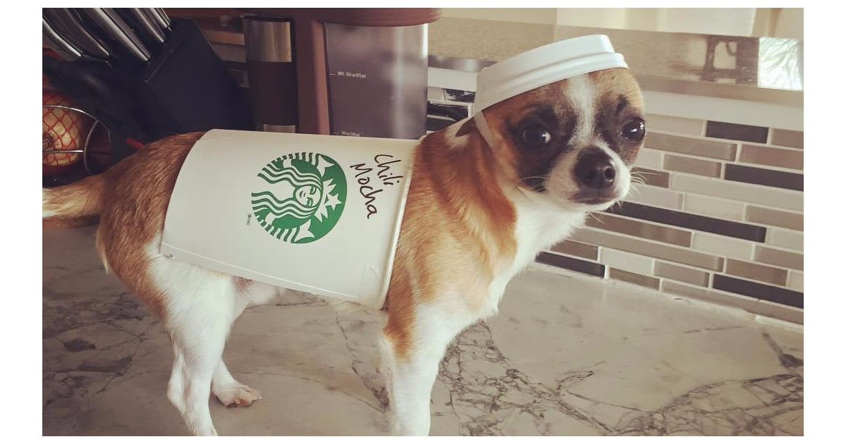 DIY Halloween Costumes For Dogs - POPSUGAR Pets 15 of the Best DIY Halloween Dog Costumes Out There - 웹