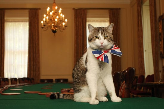 It seems like the entire world is buzzing about the royal wedding, and the hype isn't limited to humans! Larry, the reigning cat at number 10 Downing Street (the British prime minister's residence), is clearly pretty excited about the event himself. Apparently, when your dad is the prime minister of England, you can walk all over the dining table! Although who are we kidding — even nonpolitical kitties do that. Click through for more of Larry in his adorable bow tie.
