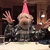 كلب الغولدنودل المنفوش هذا يتناول وليمة أحد أعياد الميلاد.