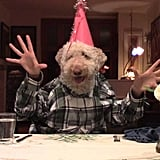 This fluffy Goldendoodle eating a birthday feast.