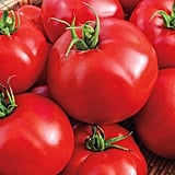 Gurney's Seed & Nursery Co. Big Beef Hybrid Tomato Plant