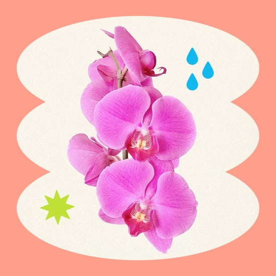 How to Keep Orchids Alive Indoors
