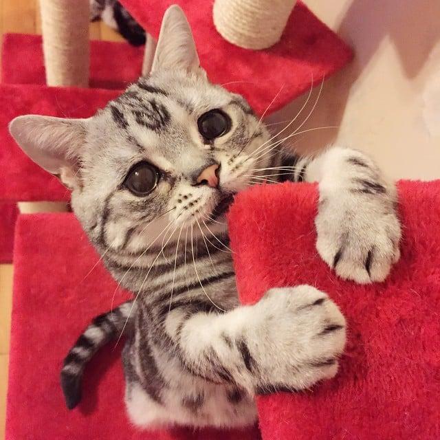 The Internet's Saddest Cat