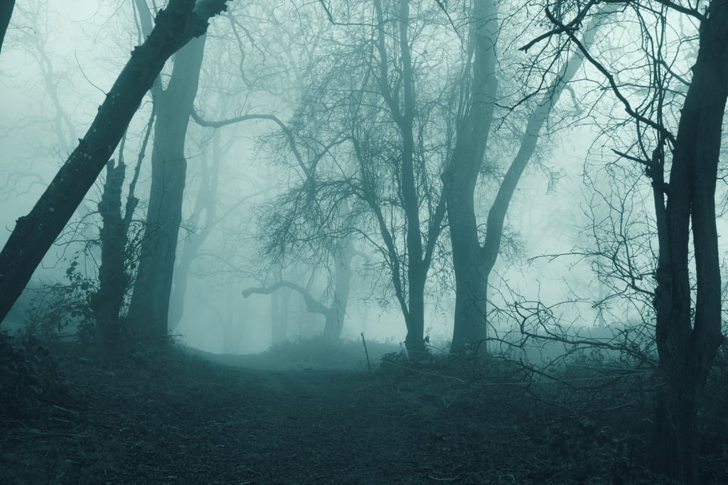Eerie Forest Zoom Background