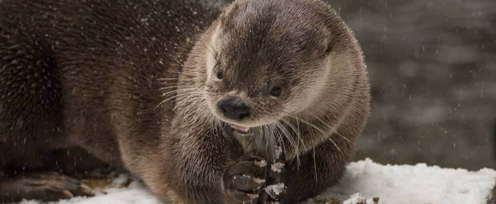 Oregon Zoo Animals Playing in Snow | Video
