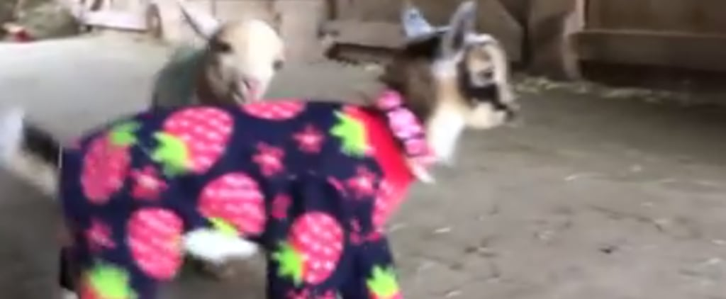 Here Are Baby Goats in Pajamas to Kick Off Your Day