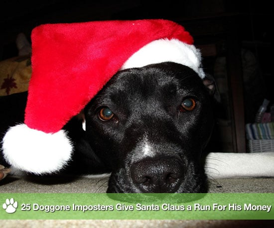 Pictures of Dogs Dressed as Santa Claus