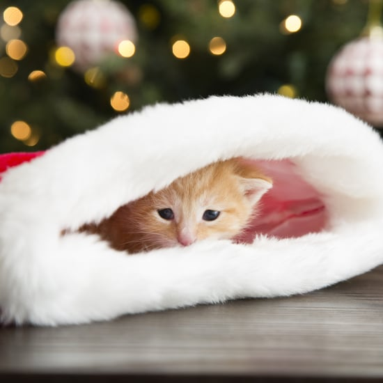 30 Stocking Stuffers Your Cat Will Love