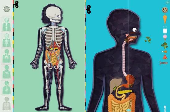 Human Anatomy App Popsugar Tech