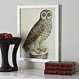 Get the Look: Albin Bird Engraving Wall Art