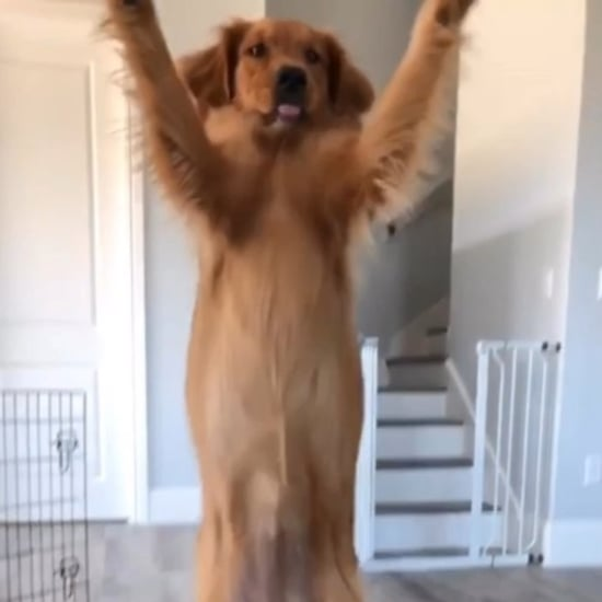Video of a Golden Retriever Giving Its Owner Her Paw