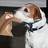 This celebrity pup takes his treats to go. Source: Getty