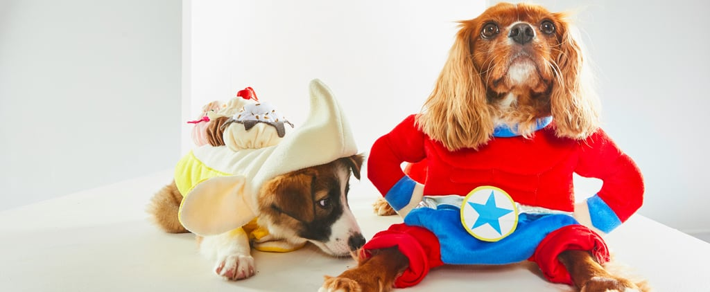 HomeGoods Hosted a Halloween Fashion Show For Dogs and Oh My God