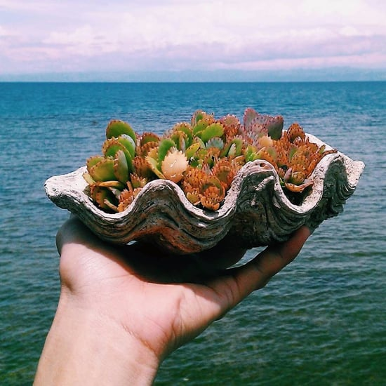 Seashell Succulent Planters