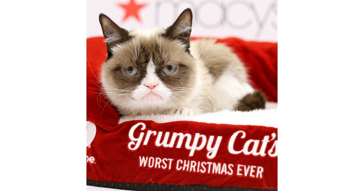 Grumpy cat movie popsugar celebrity thecheapjerseys Choice Image