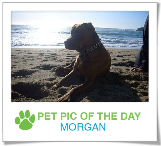Pet Pics on PetSugar 2009-03-30 09:30:38