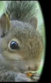 Kung-Fu Squirrels + Camera = Movie Magic