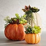 Succulent in Pumpkin