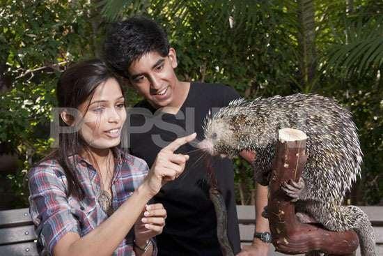 Photos of Dev Patel and Freida Pinto at San Diego Zoo
