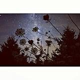 Stargaze in Your Backyard