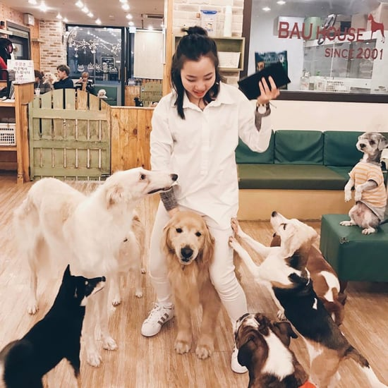 Dog Cafe South Korea