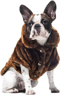 Frontgate Faux-Fur Pet Jacket (This One's For the Pooch!)