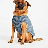 Wool and the Gang Dog's Life Coat