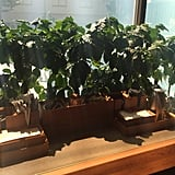 The Coffee Plants