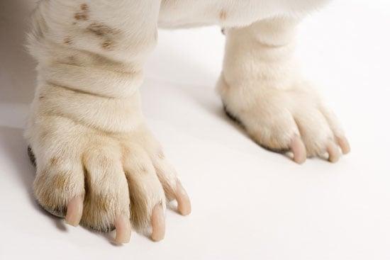 Epsom Salts Safe For Pets